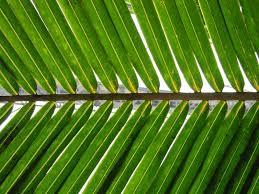 palm sunday death resurrection